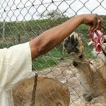 Mutula Kilonzo Was A Lion Walking Amongst Men