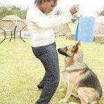 The Mombasa Dog Porn Story: Media Should Apologize To The Eleven Girls, No Dog Involved