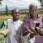 Cassava on eBay? M-Farm SMS helps Kenya's farmers get better prices