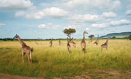 The Masai Mara: 'It will not be long before it's gone'