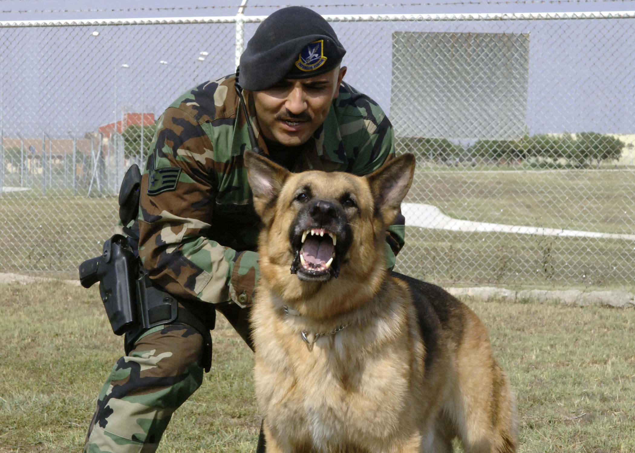Britain Ambassador donates 20 military dogs to KDF to be used in Syria