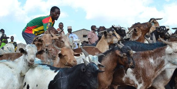 Kimalel Goat Auction: There was nothing 'digital' in Jubilee,  Uhuru using 20th Century Economic Model in the 21st Century!